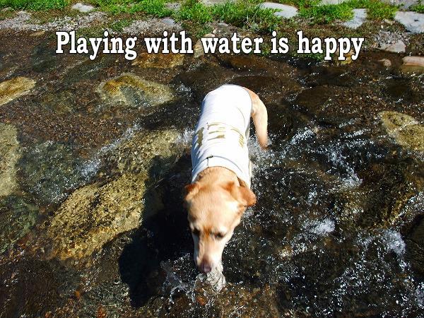 水遊びは楽しい