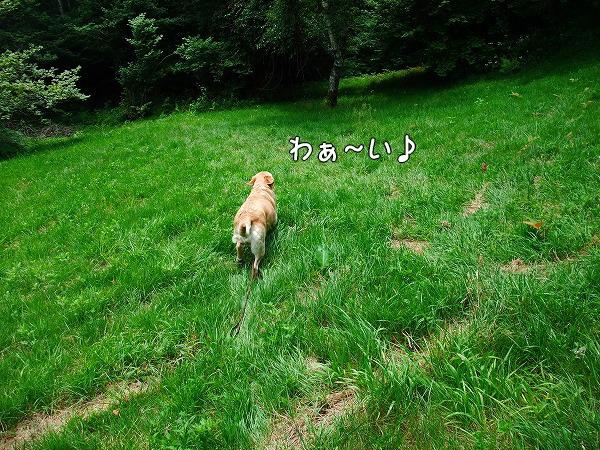 s-2008_0727myu0054