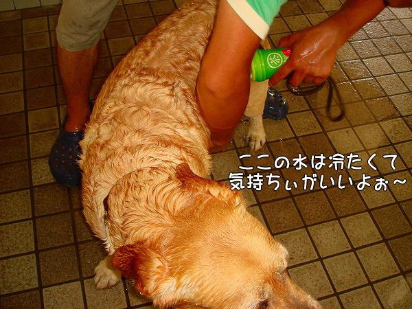 s-2008_0727myu0077