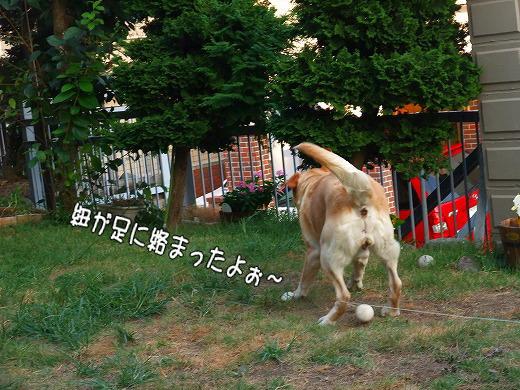 s-2008_0730myu0015