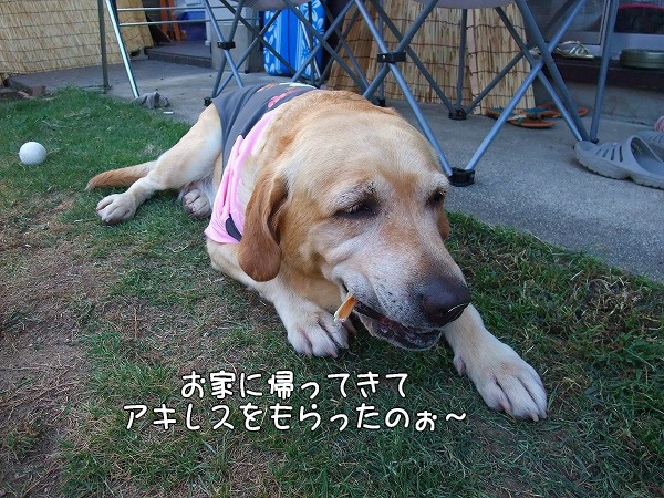 s-2008_0813myu0115