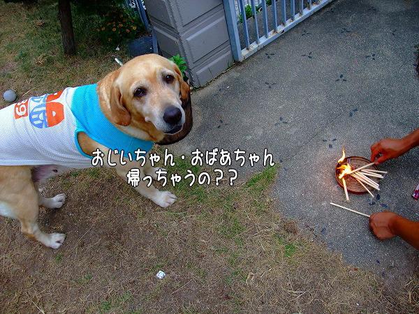 s-2008_0816myu0013
