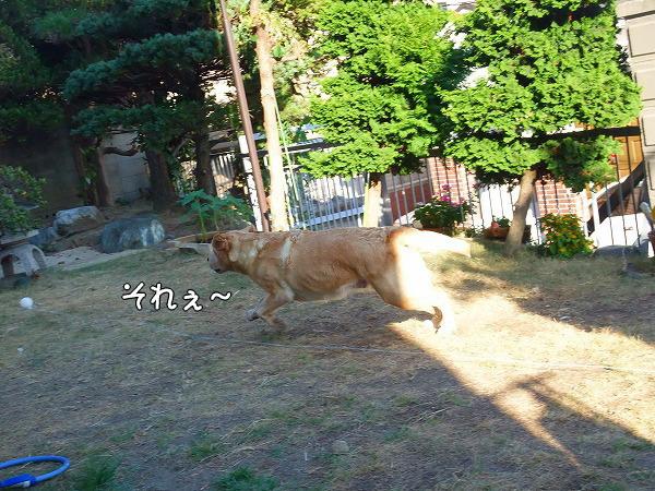 s-2008_0817myu0014