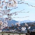 写真: 田舎の春