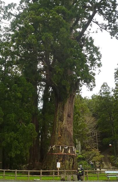 千葉県清澄寺の大杉