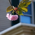 To the Window 5-21-14