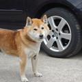 愛犬と愛車