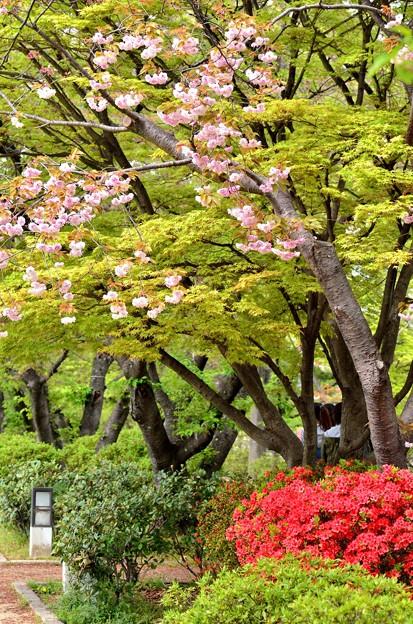 Photos: 2014_0419_135936_S