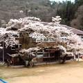 Photos: 旧田之尻小学校