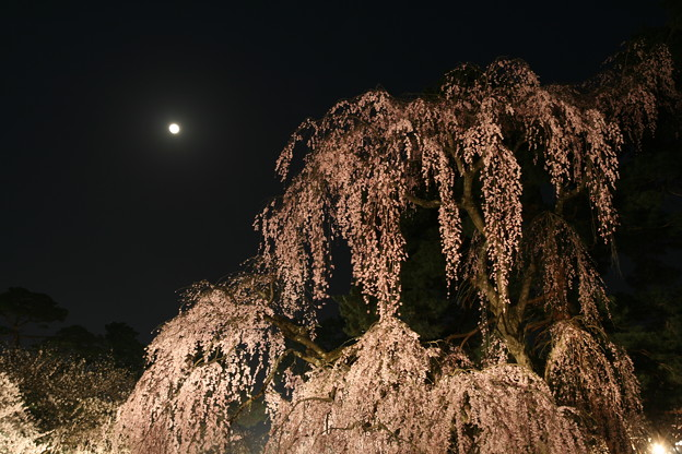 Photos: 弘前28