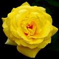 薔薇 >>: i伊豆の踊り子 IMG_1260