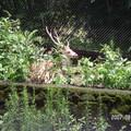 Photos: 鹿もいた!
