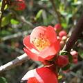 写真: 明月院 花
