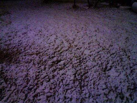 090303-雪降ってます (2)