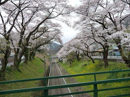 090405-御殿場線桜並木 (5)