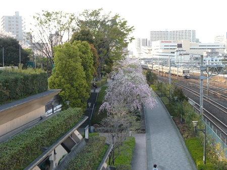090409-川口駅の桜 (1)