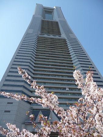 090409-MM21 ランドマークタワーと桜 (22)