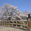 Photos: 龍岡城跡DSC_3437