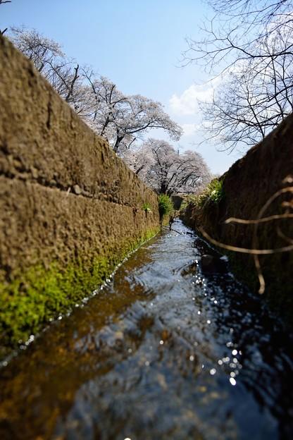 Photos: 龍岡城跡DSC_3490
