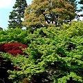 Photos: 090428 263樹木