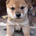 写真: koinu_1273