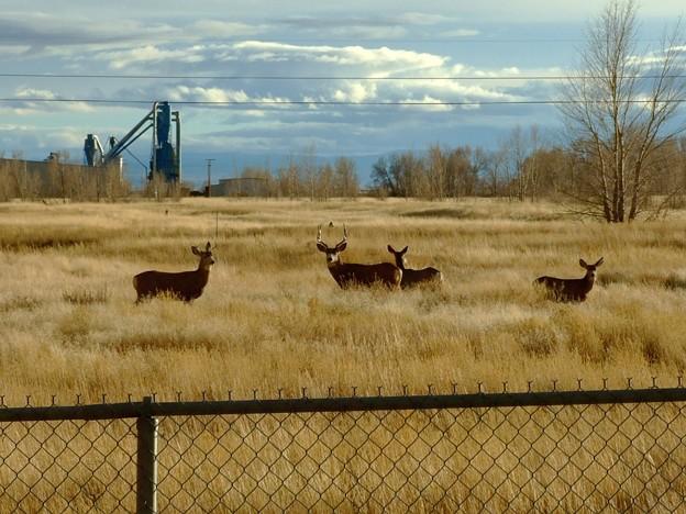 警戒する鹿の親子