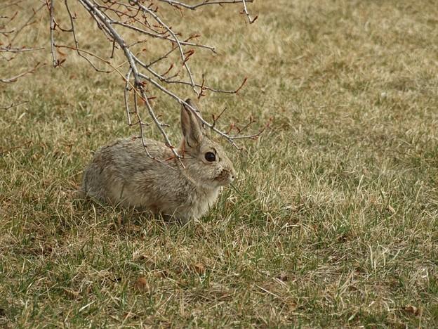 まゆ毛ウサギ2