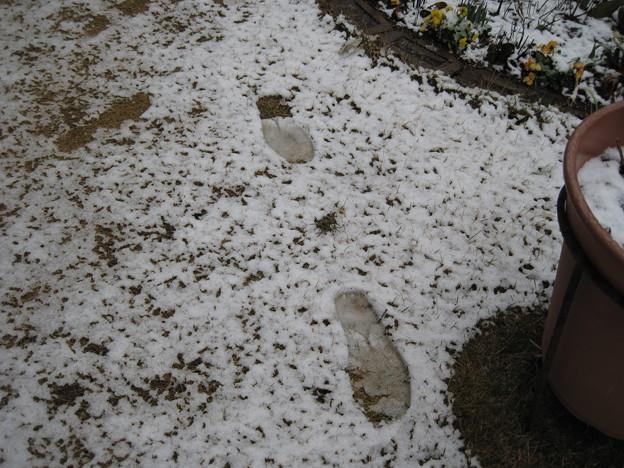 IMG_1718-雪に足跡