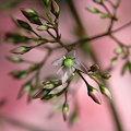 Photos: ??? 花の名称がわかりません^^