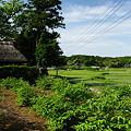 写真: 茅葺屋根と緑の風景