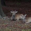 Photos: どこも鹿・しか/しか・鹿々?