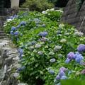 Photos: 風鈴まつり4260614c08