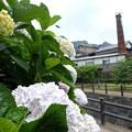 Photos: 風鈴まつり4260614c13
