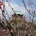 Photos: 梅林から大阪城2