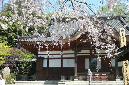 深大寺桜8