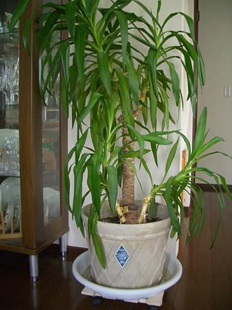 観葉植物の台 キャスター付き (5)