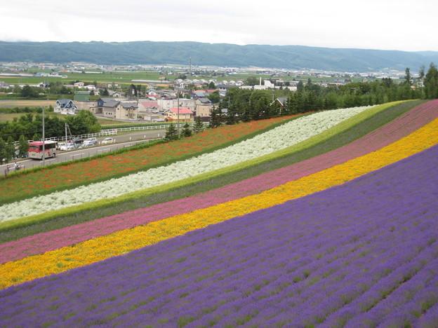 Photos: ラベンダー畑