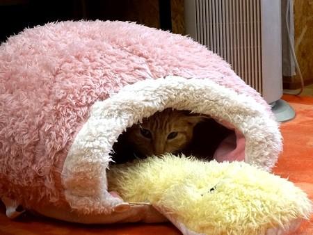 シモン「このカメさんベッドお気に入りなので、婿入り道具に買ってください」