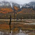大正池の枯れ木