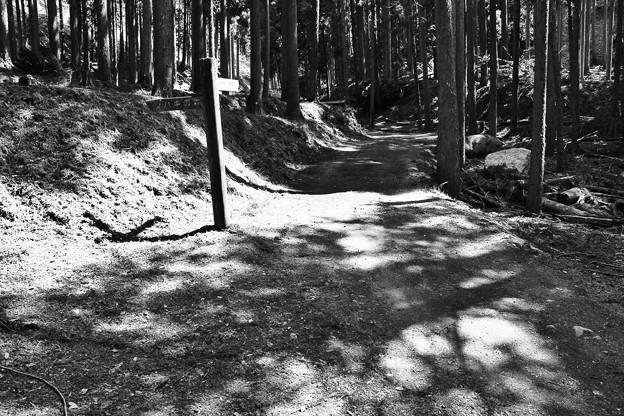 千年椿への道