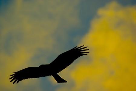 Fly away #2
