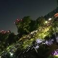 藤の花ライトアップ☆