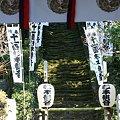 Photos: 2009.01.17 鎌倉 杉本寺 仁王門から苔むした石段