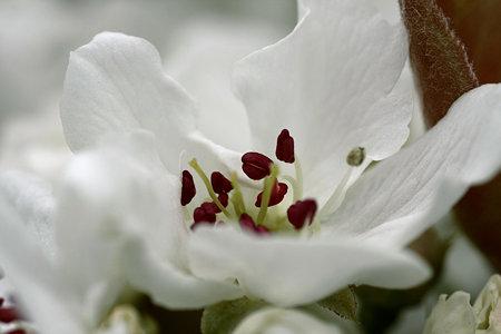2009.04.05 アオナシ-1