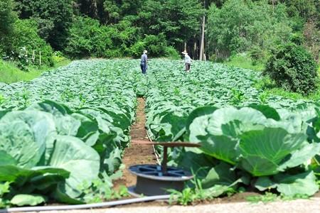 2014.06.16 追分市民の森 キャベツ畑のリールの使い方