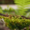Photos: 2014/5/1 mosses