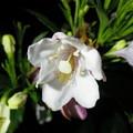 Photos: 201207130011