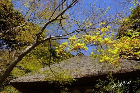三渓園~春~-085
