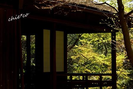 三渓園~春~-088
