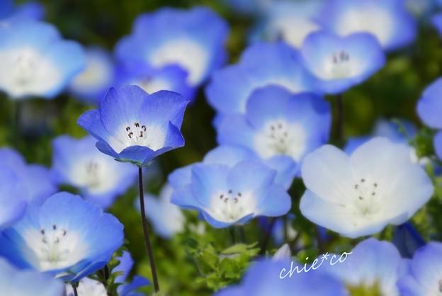 くりはま花の国-112